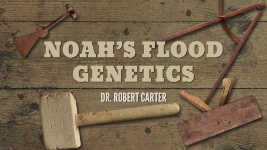 Origins - 1703 Noahs Flood Genetics