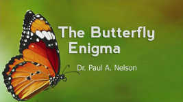 Origins - 1801 The Butterfly Enigma