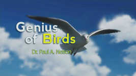 Origins - 1802 The Genius of Birds