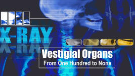 Origins - 714 Vestigial Organs - From One Hundred to None