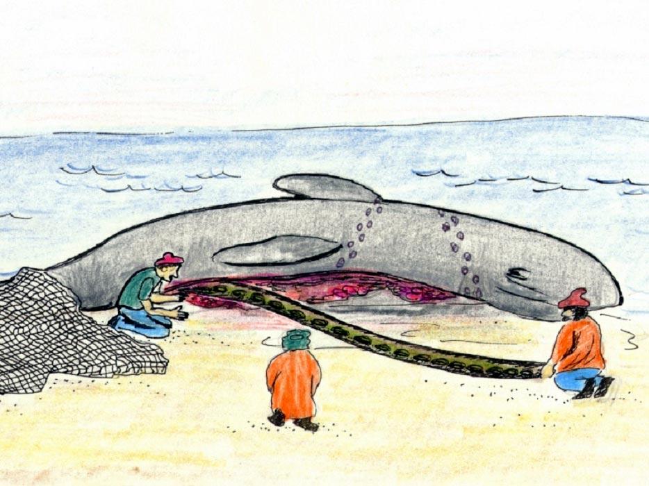 Картинка кит в животе